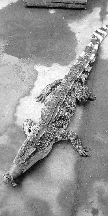 浙江萧山土豪婚宴:上了一整条鳄鱼(图)