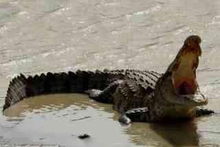 非洲妇女的15个娃被喂鳄鱼