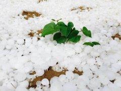 陕西榆林遭鸡蛋般大冰雹袭击