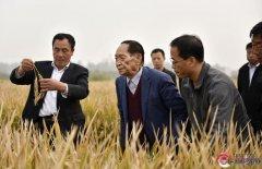 """袁隆平""""超级稻""""亩产1149公斤 再"""